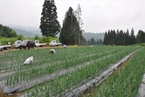 高原で野菜づくり